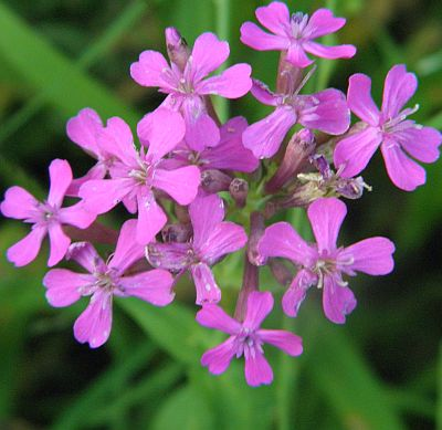 Herbal alternative to clomid